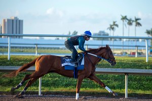 Gun Runner breezes Jan. 22 at Gulfstream Park