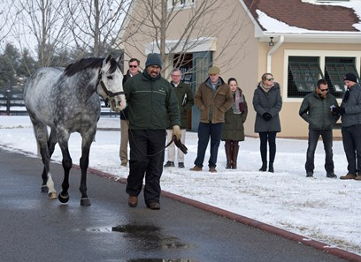 Liam S Map Horse Profile Bloodhorse