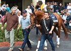 Gun Runner schooling Jan. 22 for the Pegasus World Cup at Gulfstream Park