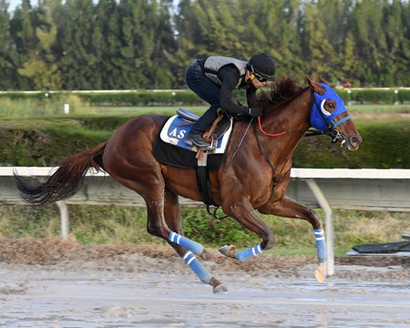Gunnevera Gulfstream Park, January 13, 2018