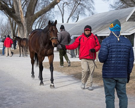 Hip 781A Mrs McDougal at Eaton Sales Scenes and people at Keeneland January Sales 2018.