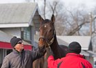 Eaton Sales' Reiley McDonald looks over Mrs McDougal at the Keeneland January sale