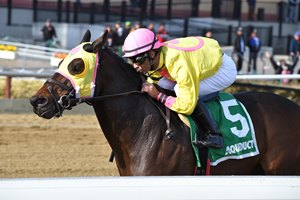 Control Group takes the Alex M. Robb Stakes by four lengths at Aqueduct