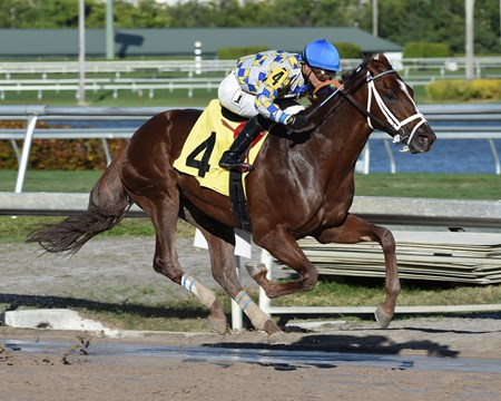 Master Manipulator - Maiden Win, Gulfstream Park - January 3, 2018