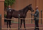 A half brother to Caravaggio hammers for $1 million at the Keeneland January sale