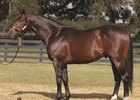 High Cotton, a grade 3 winner, has been pensioned after siring 11 black-type winners