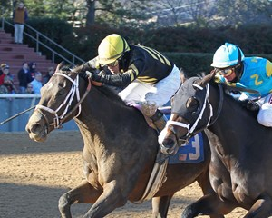 Gary Stevens pilots Bravazo during a Jan. 13 allowance score at Oaklawn Park