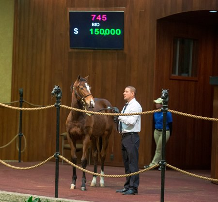 Hip 745 tops the final day's session, bringing $150,000 from agent Patrice Miller