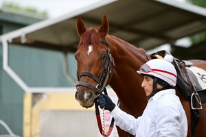 Giant Expectations will start for lessee Pegasus Race Participants