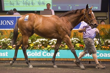 Lot 1001, a filly by Not a Single Doubt, tops Book 2 of the 2018 Magic Millions Gold Coast yearling sale