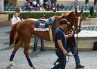 Stellar Wind schooling at Gulfstream Park Jan. 25