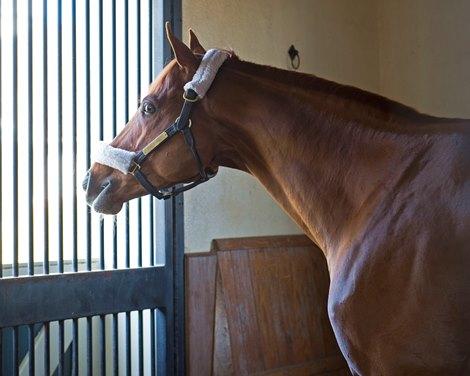 Gun Runner Settles In For Shift To Stud Career Bloodhorse