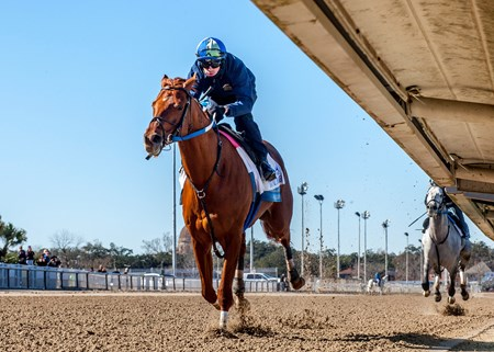 Gun Runner had his final work with Florent Geroux aboard at the Fair Grounds Race Course before the Pegasus World Cup Invitational.