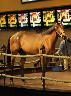 Hip 164, a Quality Road colt, topped the Barretts January sale at $120,000