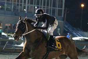 Wellabled gallops to the wire, finishing seven lengths in front in the Forego Stakes at Turfway Park