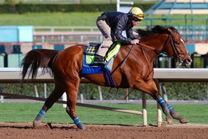 Masochistic works Jan. 20 at Santa Anita Park