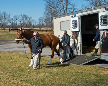 Gun Runner arrives at Three Chimneys Farm and is lead by stallion manager Sandy Hatfield Jan. 28, 2018 Three Chimneys Farm in Versailles, Kentucky. Chris Baker behind horse.