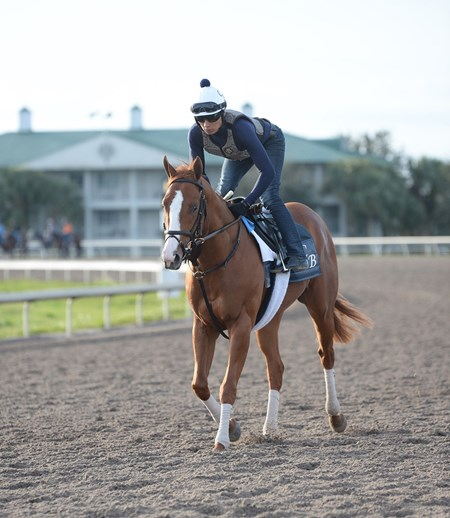 Good Magic - Palm Meadows - January 17, 2018