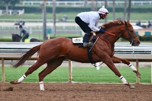 Giant Expectations works Jan. 19 at Santa Anita Park