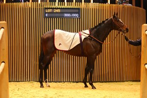Learning to Fly topped the Arqana February mixed sale