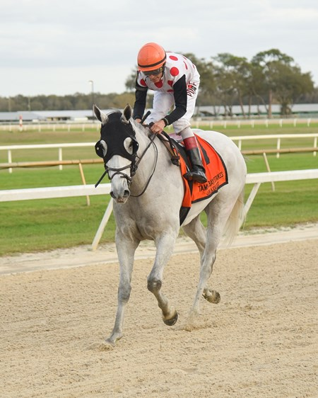 World Approval wins the 2018 Tampa Bay Stakes