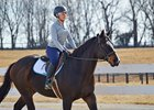 Lombo Speeds To Victory In Robert B Lewis Bloodhorse
