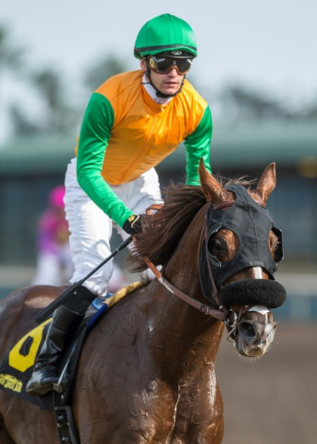 Jockey Flavien Prat guides Om to the winner's circle after their victory in the G3, $100,000 Thunder Road Stakes, Saturday, February 10, 2018 at Santa Anita Park, Arcadia CA.