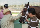 Trainer Peter Miller pets Roy H after the gelding's Palos Verdes Stakes win at Santa Anita Park