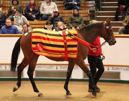 Consigned by Somerville Lodge as Lot 379, Willie John sold to Roger Varian for a record 1.9 million guineas