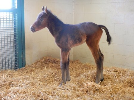 Filly by Peace and Justice out of Movie Starlet