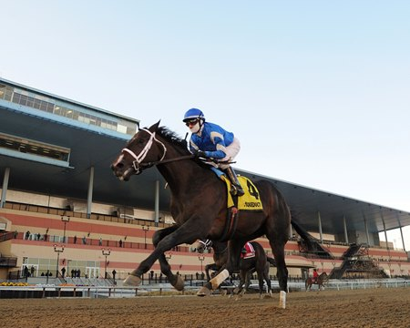 Avery Island wins the Withers Stakes at Aqueduct Racetrack