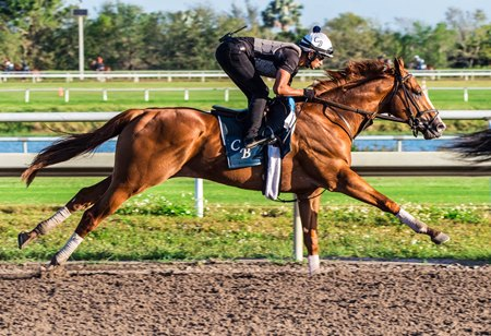 Juvenile champion Good Magic works Feb. 24 at Palm Meadows Training Center
