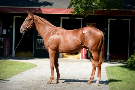 Flameaway at the 2016 Fasig-Tipton Saratoga yearling sale, where he was purchased by John Oxley for $400,000
