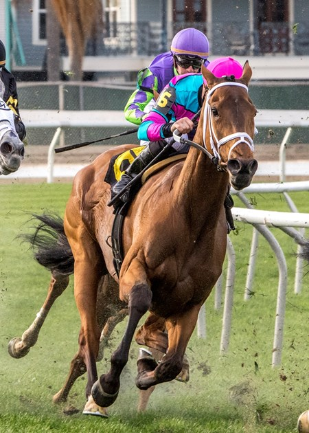 2/17/2018. -  Mom's On Strike with jockey Adam Beschizza aboard turns into the stretch and goes on to win the Albert Stall Memorial Stakes at Fair Grounds.