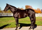 Ready's Image will stand the 2018 season at Midwest Equine and Veterinary Hospital in Indiana