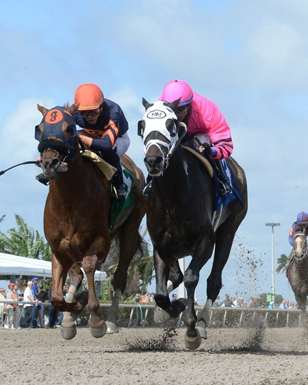 Conquest Windycity defeats Mind Your Biscuits AOC, Gulfstream Park, February 9, 2018