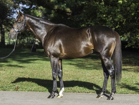 Flintshire at Hill 'n' Dale Farms near Lexington
