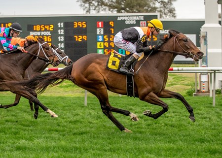 Compelled wins the 2018 Mardi Gras Stakes