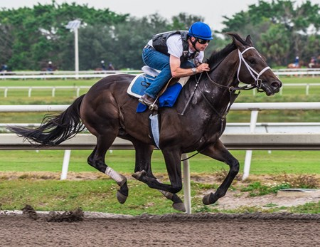 Avery Island - Palm Meadows - Jan. 20, 2018