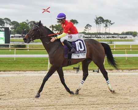 Quip wins the 2018 Tampa Bay Derby