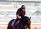 Mendelssohn trains ahead of the UAE Derby at Meydan Racecourse