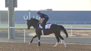 Dubai World Cup: Horses Training, March 28, 2018 Part 2
