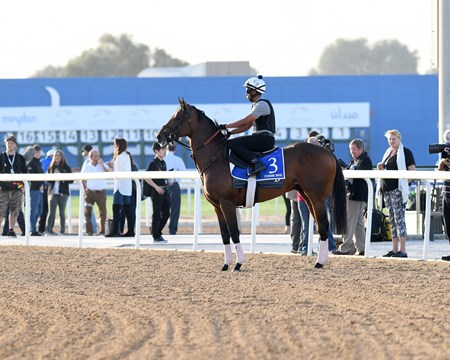 Economic Model, Godolphin Mile entrant, Dubai World Cup 2018, Meydan UAE, photo by Mathea Kelley, 3/26/18