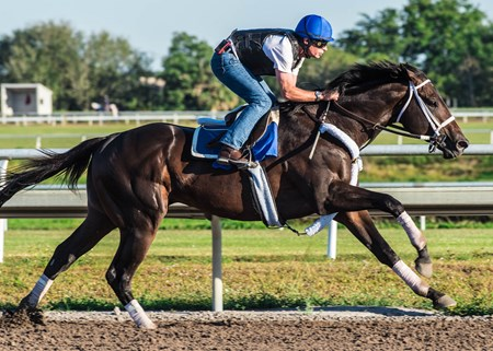 Avery Island - Palm Meadows - March 3, 2018