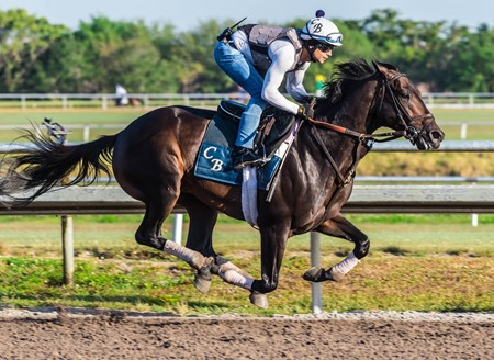 Cloud Computing - Palm Meadows, March 10, 2018