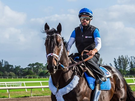Enticed - Palm Meadows - March 2, 2018