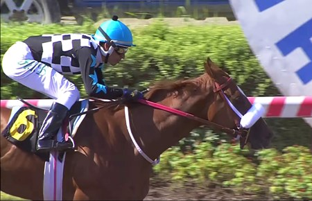 Atomicka (Daddy Long Legs--Free Dance, by War Chant) winning the Seleccion De Potrancas (G3) at Hipódromo Chile on March 3, 2018. She is Daddy Long Legs' first black-type winner