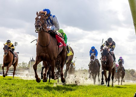 3-24-2014 -  Pin Oak Stable's Synchrony wins the 26th running of the Grade II Muniz Memorial Handicap at Fair Grounds.