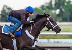 Avery Island works at Palm Meadows Training Center