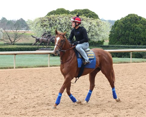 Solomini training March 16 at Oaklawn Park